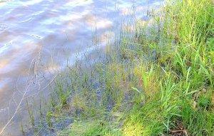 Herendeene Lake shoreline