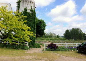 Iris Farm from parking lot