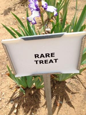 Rare Treat Iris