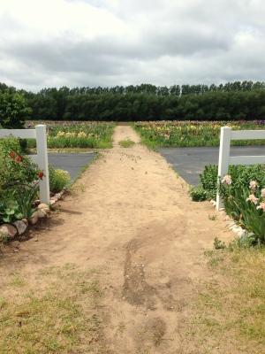 Walking out onto the Iris Farm