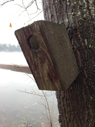 birdhouse on tree on Spider lake
