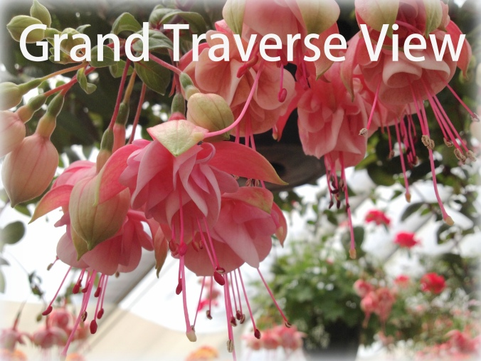 Grand Traverse View Pink Fushia for my garden from my trip to Eden Hill Greenhouse